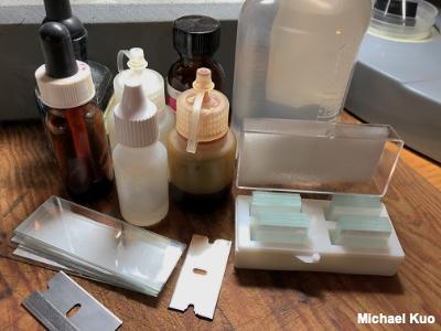 Using a Microscope to Study Mushrooms (MushroomExpert Com)